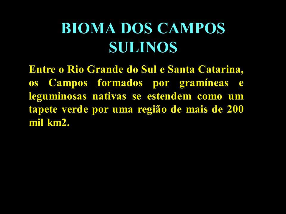 Divisão em 02 continentes BIOMA DOS CAMPOS SULINOS Entre o Rio Grande do Sul e Santa Catarina, os Campos formados por gramíneas e leguminosas nativas