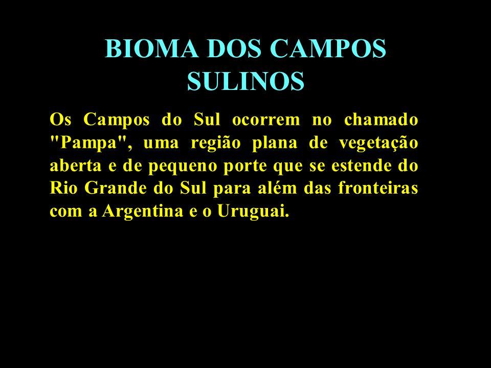 Divisão em 02 continentes BIOMA DOS CAMPOS SULINOS Os Campos do Sul ocorrem no chamado