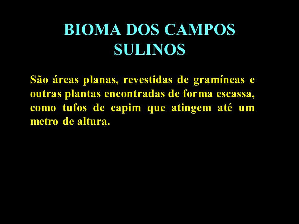 Divisão em 02 continentes BIOMA DOS CAMPOS SULINOS São áreas planas, revestidas de gramíneas e outras plantas encontradas de forma escassa, como tufos