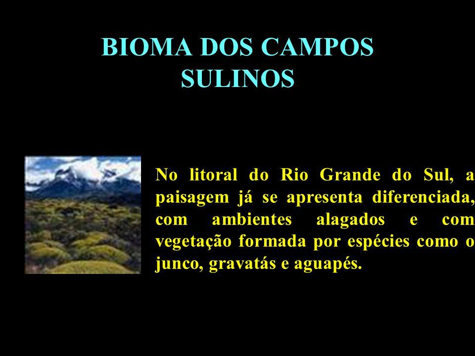 Divisão em 02 continentes BIOMA DOS CAMPOS SULINOS No litoral do Rio Grande do Sul, a paisagem já se apresenta diferenciada, com ambientes alagados e
