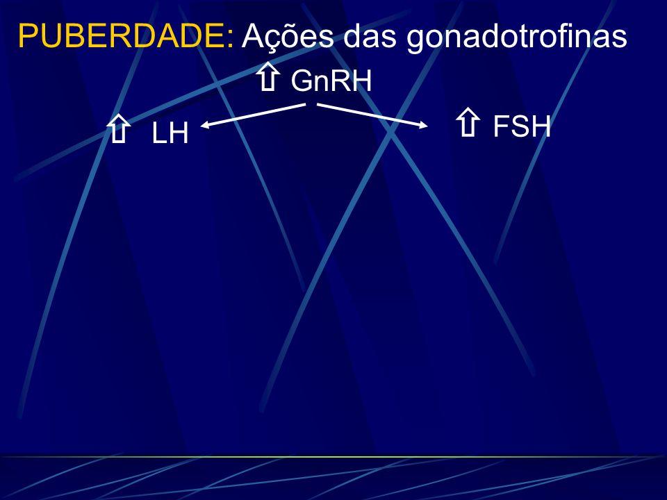 LH GnRH PUBERDADE: Ações das gonadotrofinas FSH