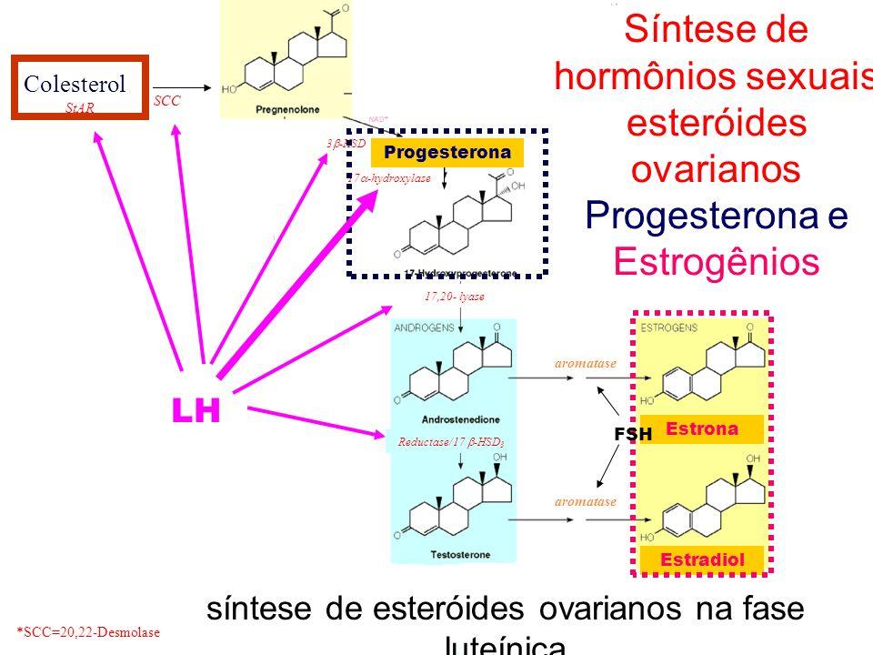 Colesterol StAR 17 -hydroxylase 17,20- lyase aromatase *SCC=20,22-Desmolase SCC 3 -HSD Reductase/17 -HSD 3 aromatase Síntese de hormônios sexuais este
