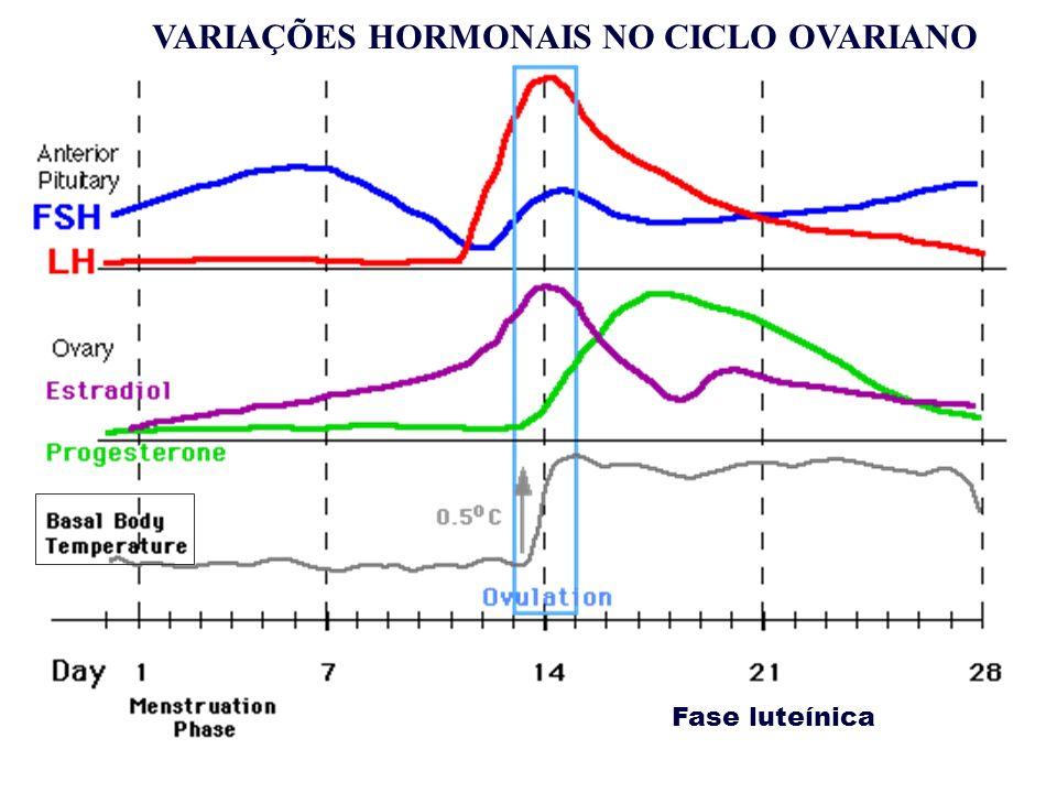 Fase luteínica VARIAÇÕES HORMONAIS NO CICLO OVARIANO