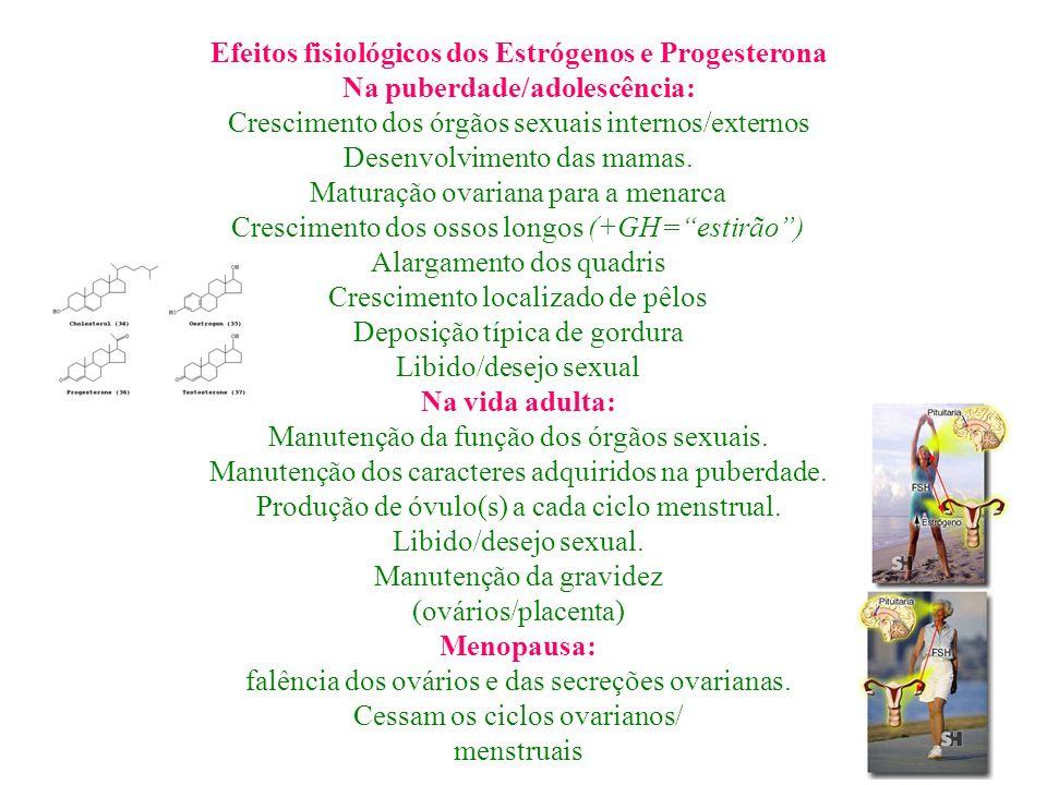 Efeitos fisiológicos dos Estrógenos e Progesterona Na puberdade/adolescência: Crescimento dos órgãos sexuais internos/externos Desenvolvimento das mam