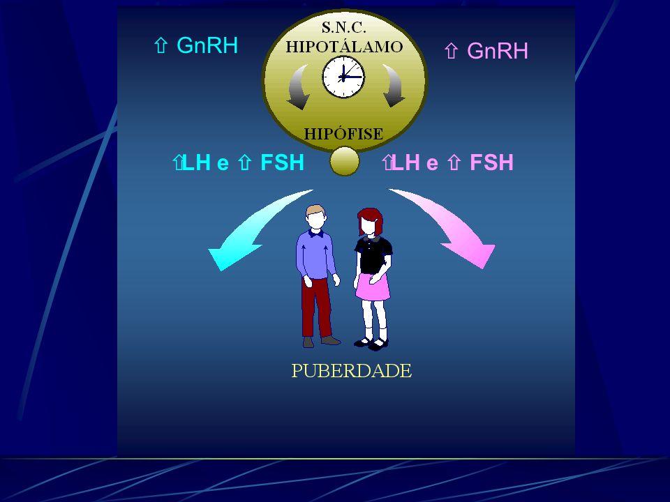 GnRH LH e FSH