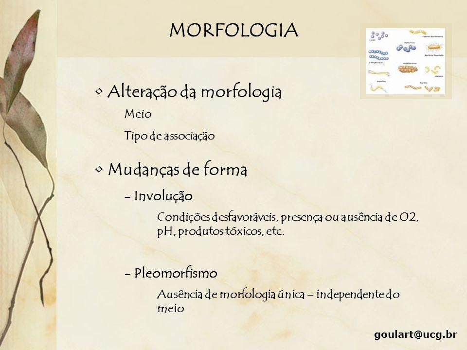 MORFOLOGIA Alteração da morfologia Meio Tipo de associação Mudanças de forma - Involução Condições desfavoráveis, presença ou ausência de O2, pH, prod