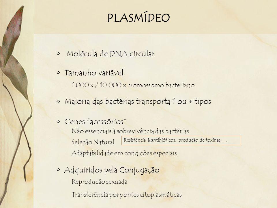 PLASMÍDEO Molécula de DNA circular Tamanho variável 1.000 x / 10.000 x cromossomo bacteriano Maioria das bactérias transporta 1 ou + tipos Genes acess