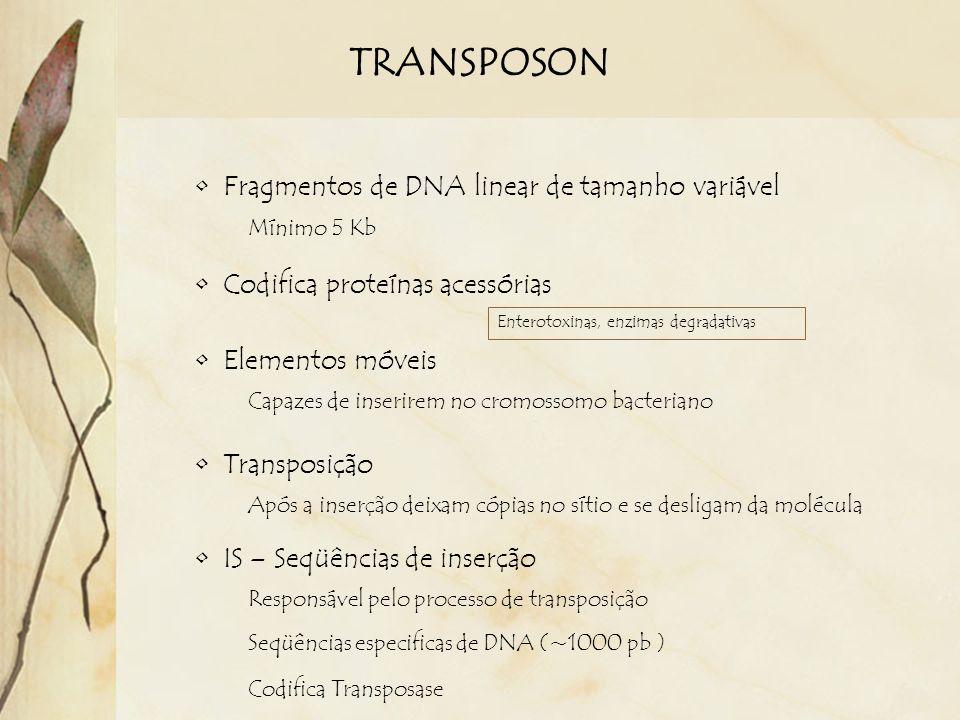 TRANSPOSON Fragmentos de DNA linear de tamanho variável Mínimo 5 Kb Elementos móveis Capazes de inserirem no cromossomo bacteriano Transposição Após a