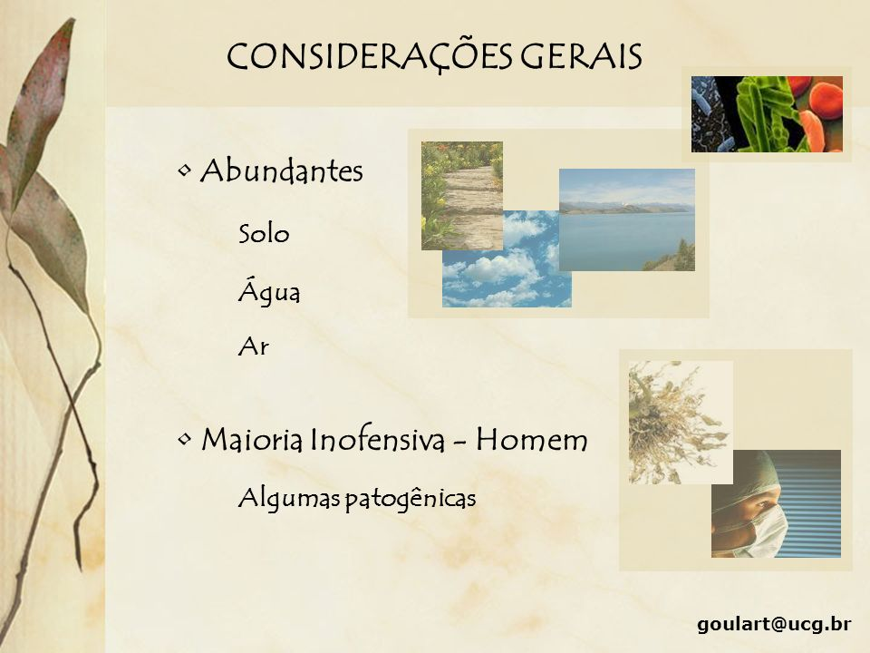 CONSIDERAÇÕES GERAIS goulart@ucg.br Abundantes Solo Água Ar Maioria Inofensiva - Homem Algumas patogênicas