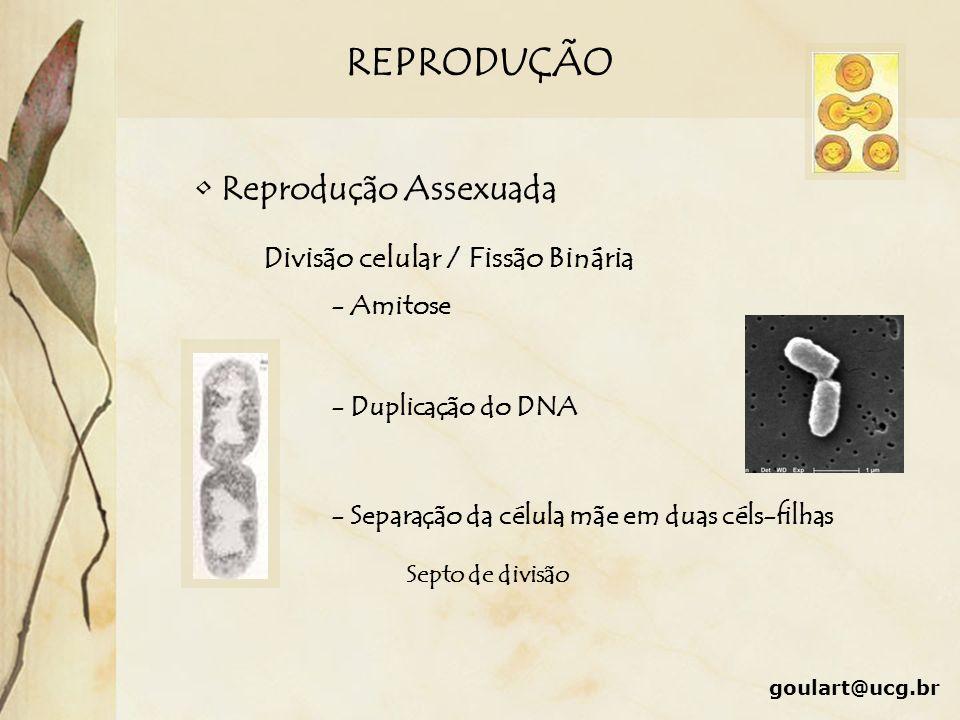REPRODUÇÃO Reprodução Sexuada Conjugação Transdução Transformação Transferência de plasmídios por pontes citoplasmáticas Absorção de fragmentos de DNA de bactérias lisadas no meio Introdução de fragmentos de DNA entre bactérias Bacteriófagos goulart@ucg.br