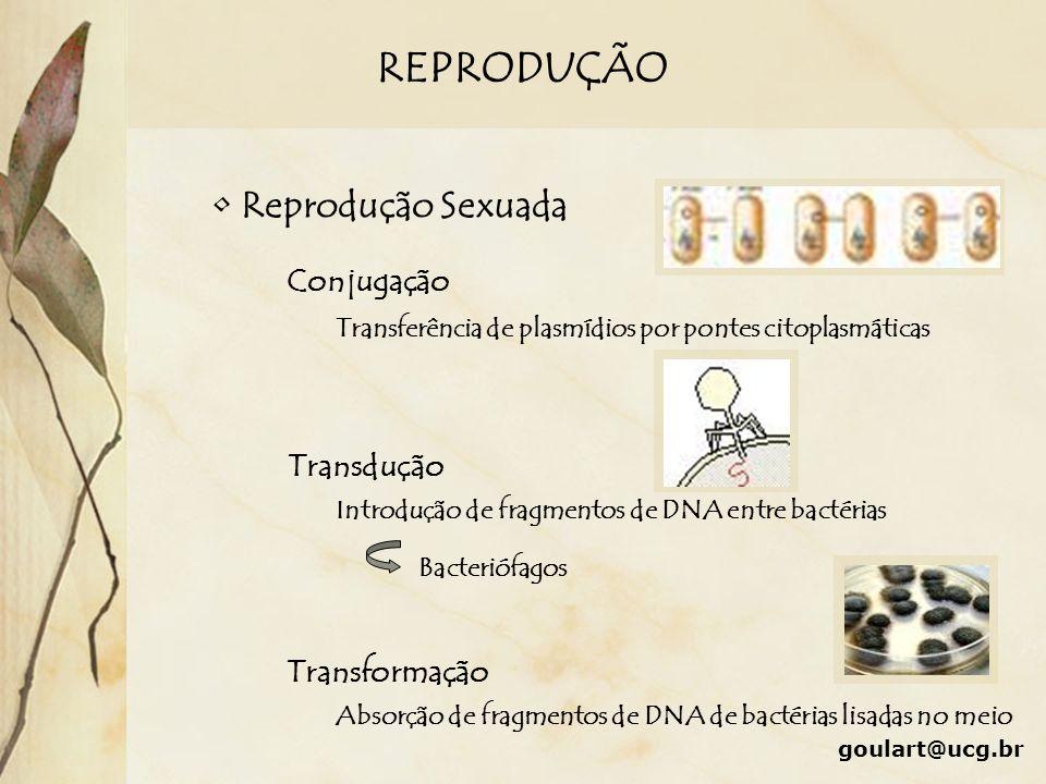 REPRODUÇÃO Reprodução Sexuada Conjugação Transdução Transformação Transferência de plasmídios por pontes citoplasmáticas Absorção de fragmentos de DNA