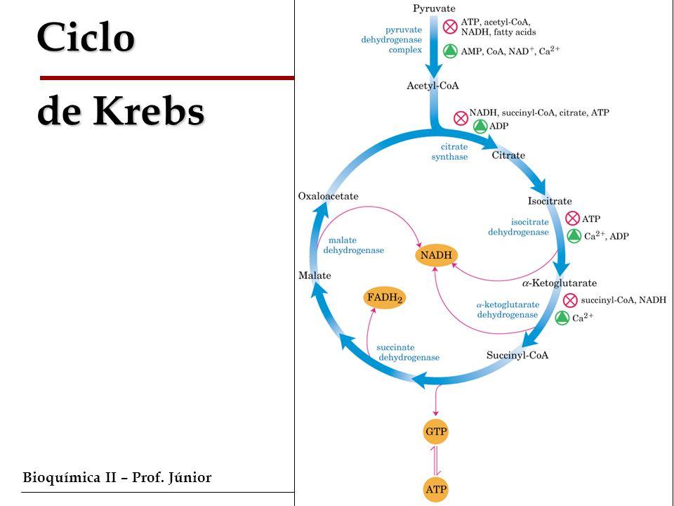 Bioquímica II – Prof. Júnior Ciclo de Krebs