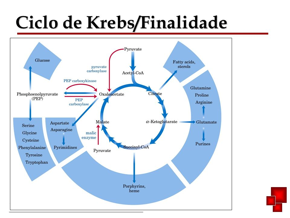Bioquímica II – Prof. Júnior Ciclo de Krebs/Finalidade