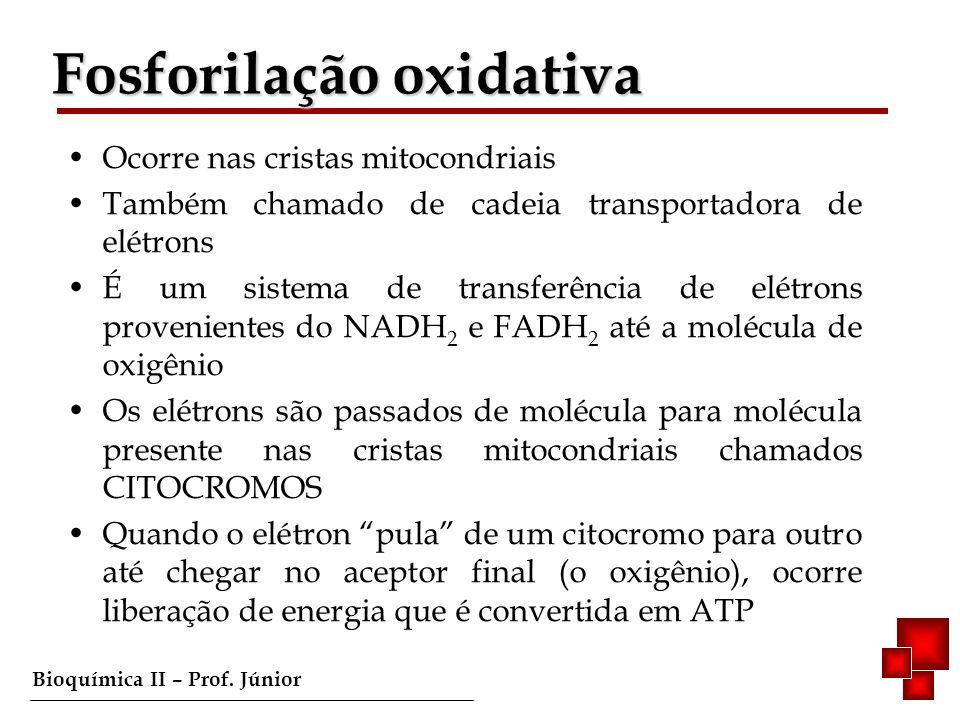 Bioquímica II – Prof. Júnior Fosforilação oxidativa Ocorre nas cristas mitocondriais Também chamado de cadeia transportadora de elétrons É um sistema
