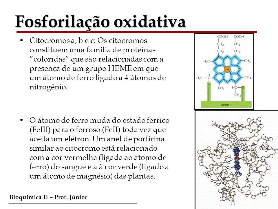Bioquímica II – Prof. Júnior Fosforilação oxidativa Citocromos a, b e c : Os citocromos constituem uma família de proteínas coloridas que são relacion