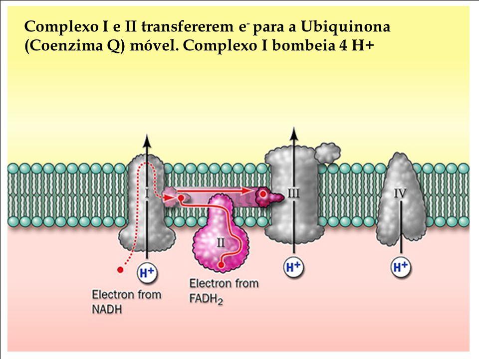 Bioquímica II – Prof. Júnior Complexo I e II transfererem e - para a Ubiquinona (Coenzima Q) móvel. Complexo I bombeia 4 H+
