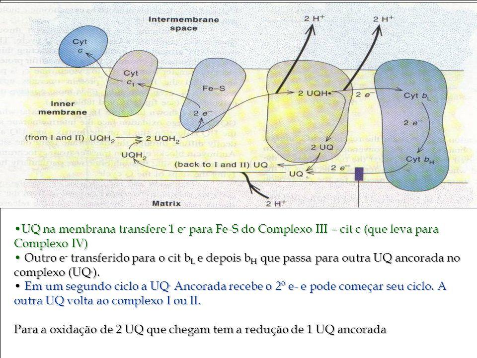 Bioquímica II – Prof. Júnior UQ na membrana transfere 1 e - para Fe-S do Complexo III – cit c (que leva para Complexo IV)UQ na membrana transfere 1 e