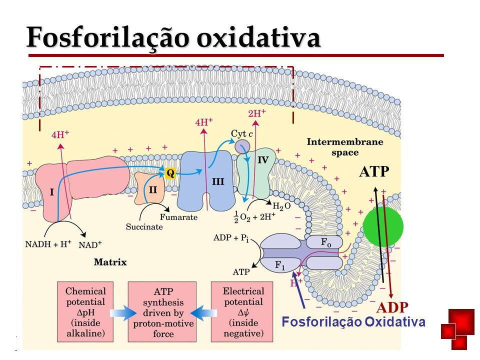Bioquímica II – Prof. Júnior Fosforilação oxidativa Fosforilação Oxidativa ADP ATP