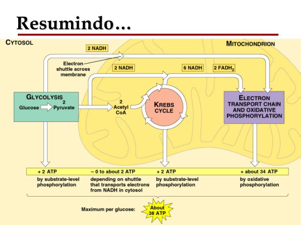 Bioquímica II – Prof. Júnior Resumindo…