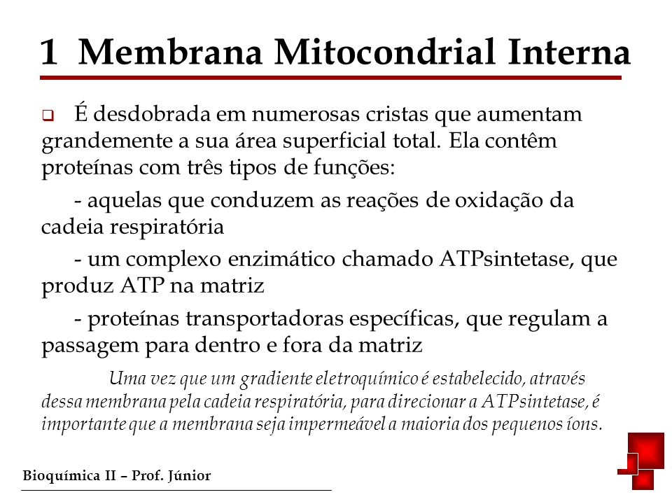 Bioquímica II – Prof.