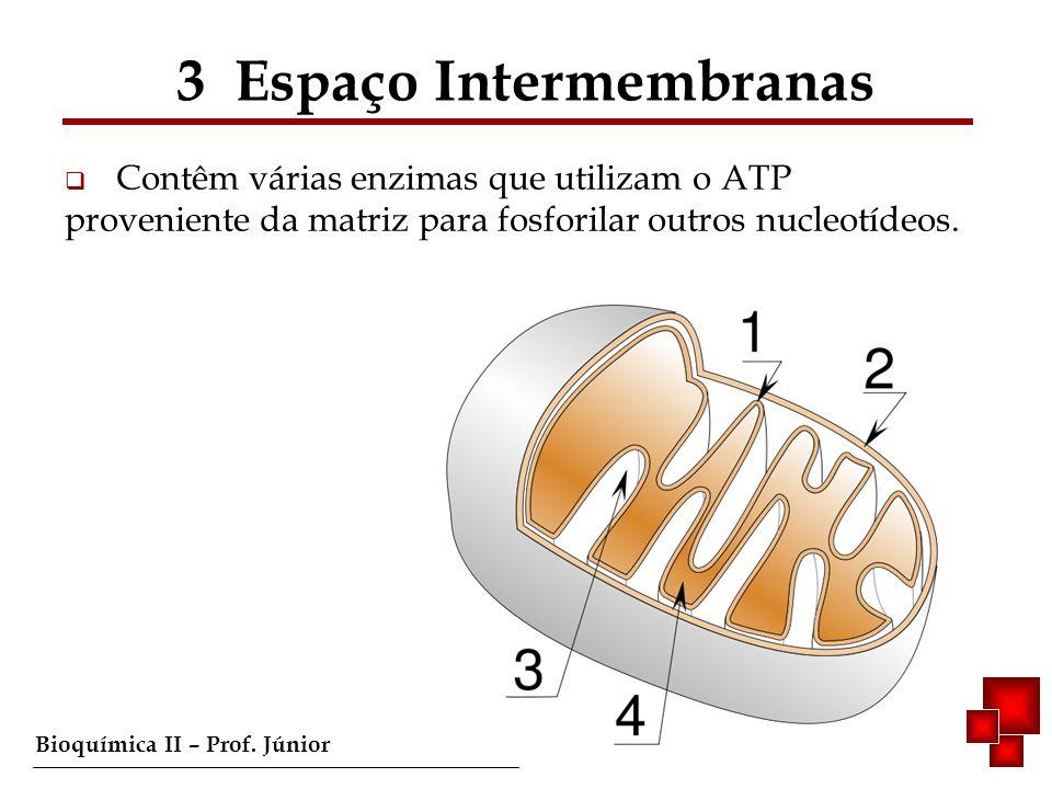 Bioquímica II – Prof. Júnior Contêm várias enzimas que utilizam o ATP proveniente da matriz para fosforilar outros nucleotídeos. 3 Espaço Intermembran