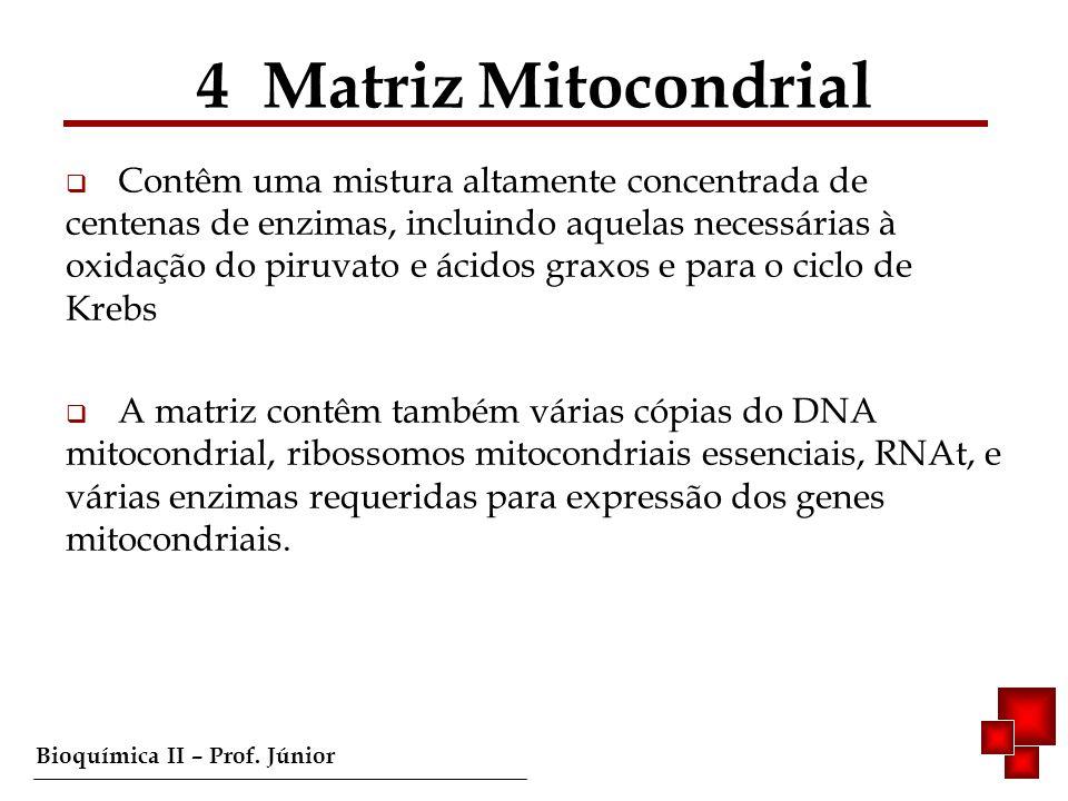Bioquímica II – Prof. Júnior Contêm uma mistura altamente concentrada de centenas de enzimas, incluindo aquelas necessárias à oxidação do piruvato e á