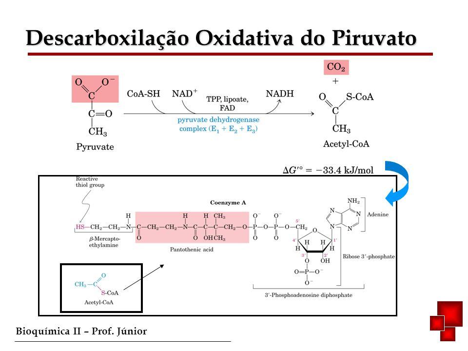 Bioquímica II – Prof. Júnior Acetil-CoA/Fases