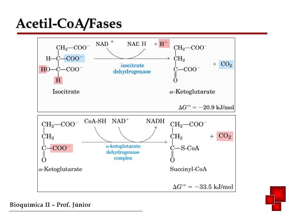 Bioquímica II – Prof.Júnior Complexo I e II transfererem e - para a Ubiquinona (Coenzima Q) móvel.