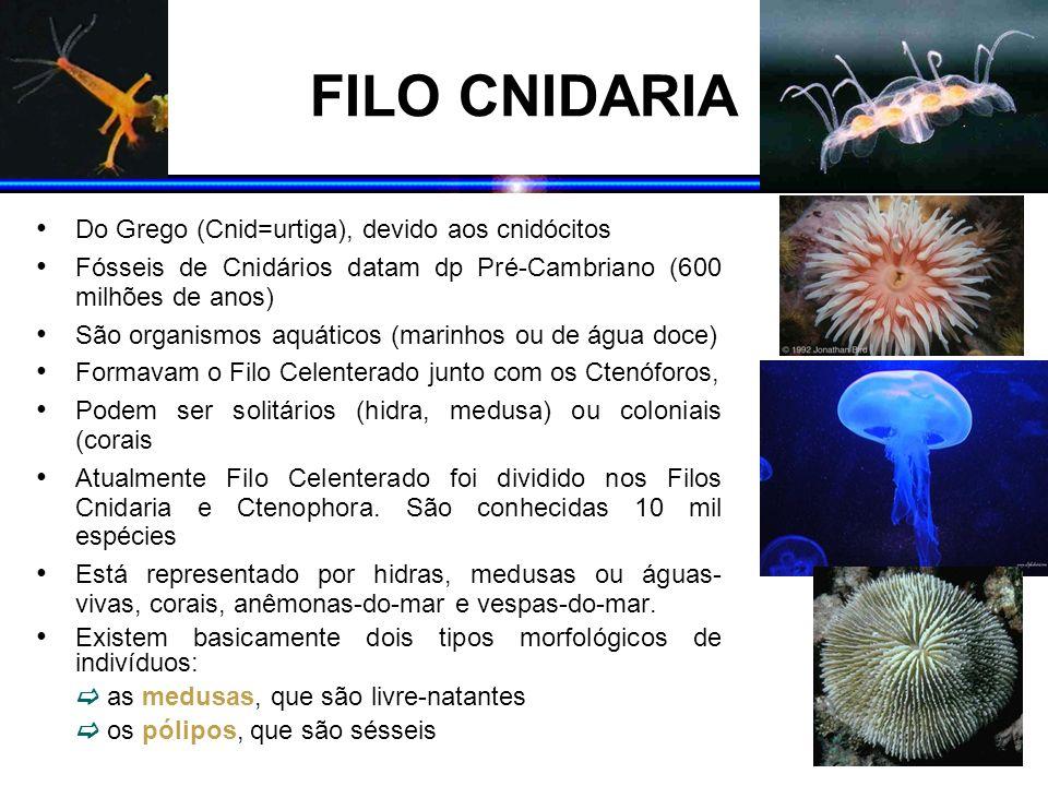 FILO CNIDARIA Do Grego (Cnid=urtiga), devido aos cnidócitos Fósseis de Cnidários datam dp Pré-Cambriano (600 milhões de anos) São organismos aquáticos
