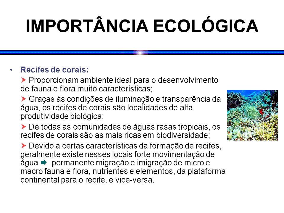 IMPORTÂNCIA ECOLÓGICA Recifes de corais: Proporcionam ambiente ideal para o desenvolvimento de fauna e flora muito características; Graças às condiçõe