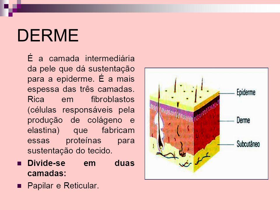 DERME É a camada intermediária da pele que dá sustentação para a epiderme. É a mais espessa das três camadas. Rica em fibroblastos (células responsáve