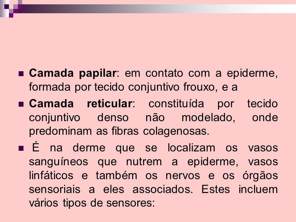 Camada papilar: em contato com a epiderme, formada por tecido conjuntivo frouxo, e a Camada reticular: constituída por tecido conjuntivo denso não mod