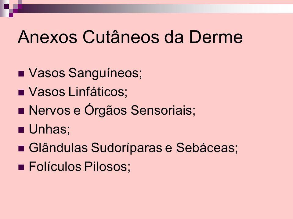 Anexos Cutâneos da Derme Vasos Sanguíneos; Vasos Linfáticos; Nervos e Órgãos Sensoriais; Unhas; Glândulas Sudoríparas e Sebáceas; Folículos Pilosos;