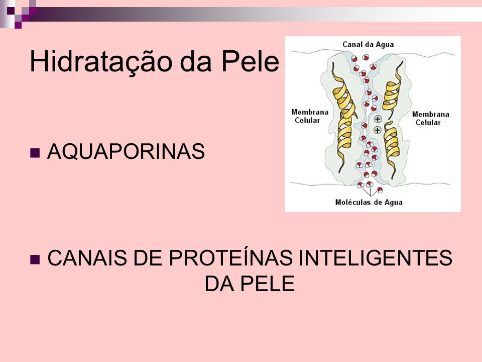 Hidratação da Pele AQUAPORINAS CANAIS DE PROTEÍNAS INTELIGENTES DA PELE