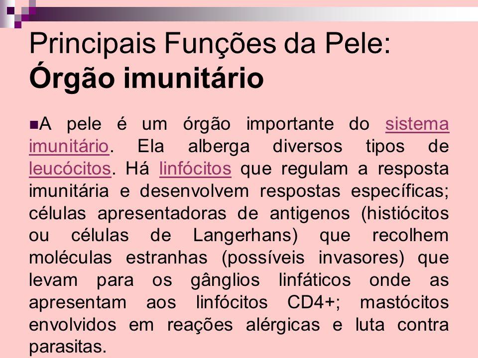 Principais Funções da Pele: Órgão imunitário A pele é um órgão importante do sistema imunitário. Ela alberga diversos tipos de leucócitos. Há linfócit