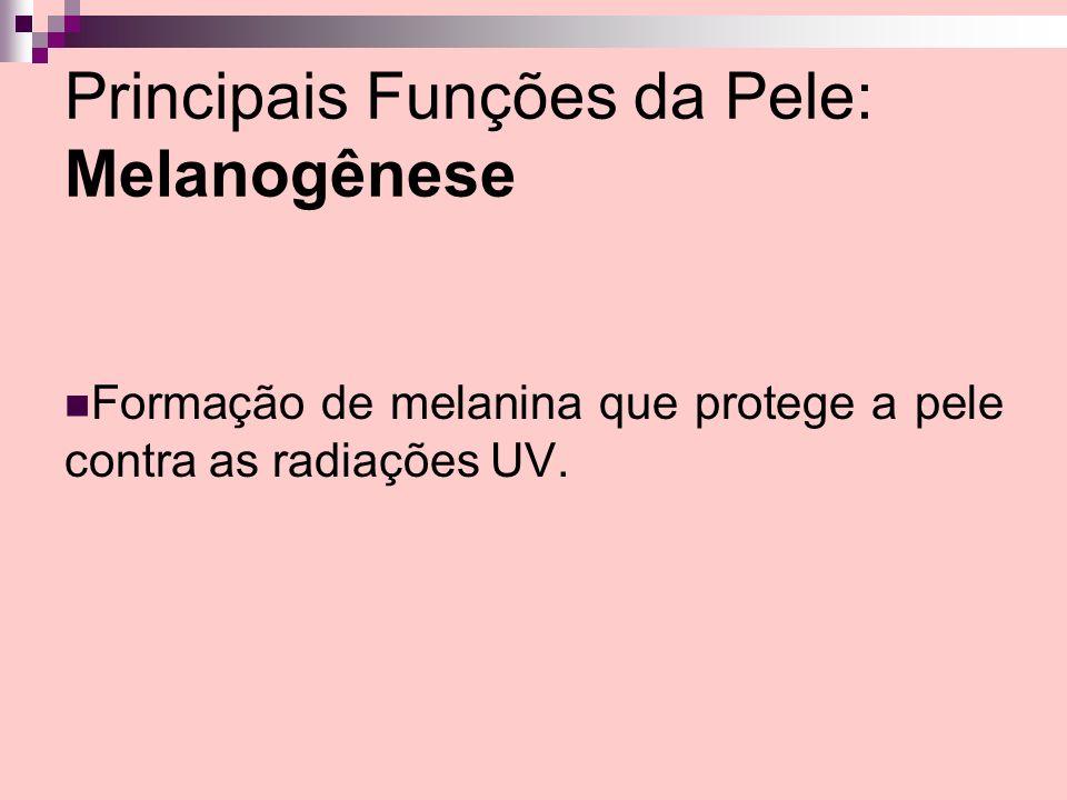 Principais Funções da Pele: Melanogênese Formação de melanina que protege a pele contra as radiações UV.