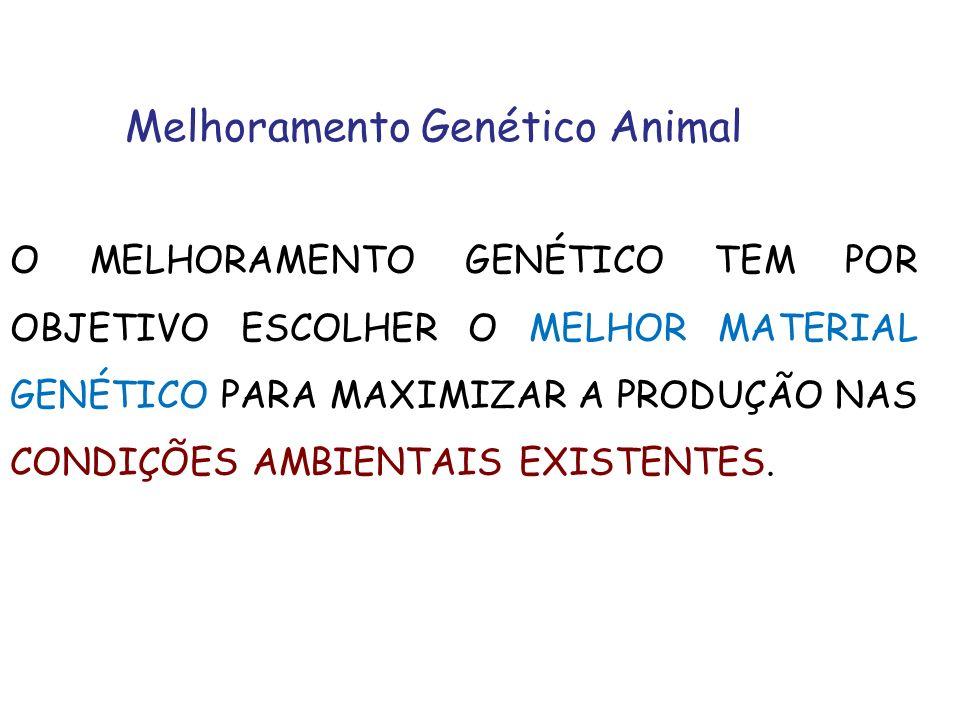 Melhoramento Genético Animal O MELHORAMENTO GENÉTICO TEM POR OBJETIVO ESCOLHER O MELHOR MATERIAL GENÉTICO PARA MAXIMIZAR A PRODUÇÃO NAS CONDIÇÕES AMBI