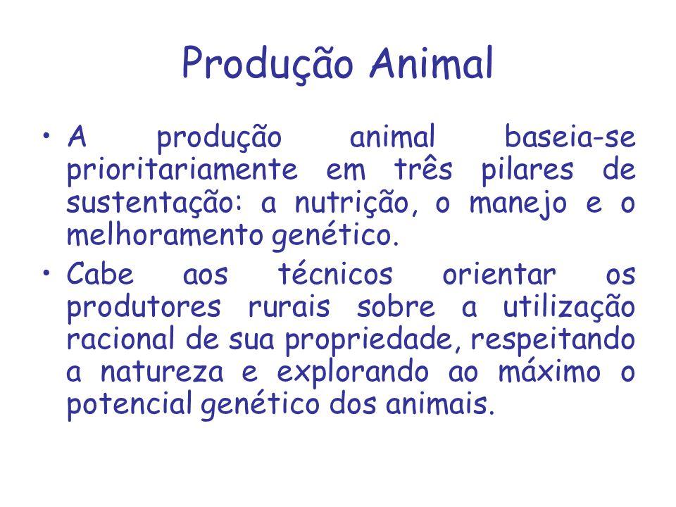 Produção Animal A produção animal baseia-se prioritariamente em três pilares de sustentação: a nutrição, o manejo e o melhoramento genético. Cabe aos
