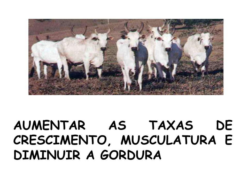 AUMENTAR AS TAXAS DE CRESCIMENTO, MUSCULATURA E DIMINUIR A GORDURA