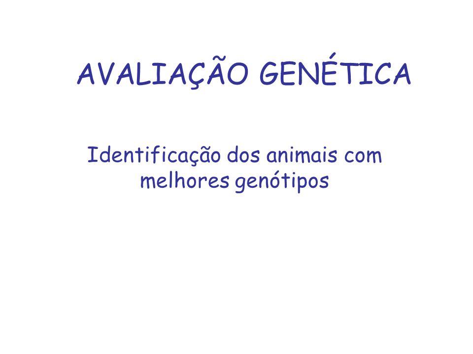 AVALIAÇÃO GENÉTICA Identificação dos animais com melhores genótipos