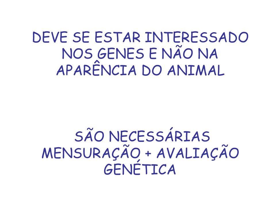 DEVE SE ESTAR INTERESSADO NOS GENES E NÃO NA APARÊNCIA DO ANIMAL SÃO NECESSÁRIAS MENSURAÇÃO + AVALIAÇÃO GENÉTICA