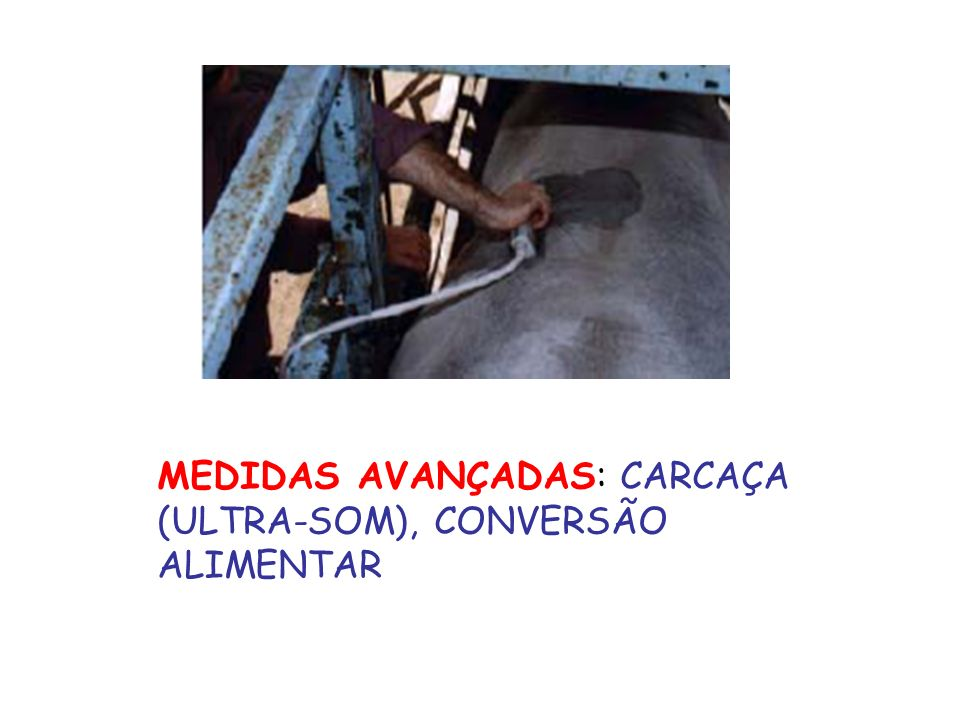 MEDIDAS AVANÇADAS: CARCAÇA (ULTRA-SOM), CONVERSÃO ALIMENTAR