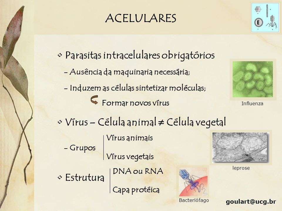 ACELULARES Parasitas intracelulares obrigatórios - Ausência da maquinaria necessária; - Induzem as células sintetizar moléculas; Formar novos vírus Ví