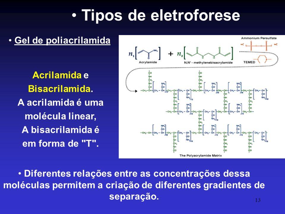 13 Diferentes relações entre as concentrações dessa moléculas permitem a criação de diferentes gradientes de separação. Tipos de eletroforese Acrilami