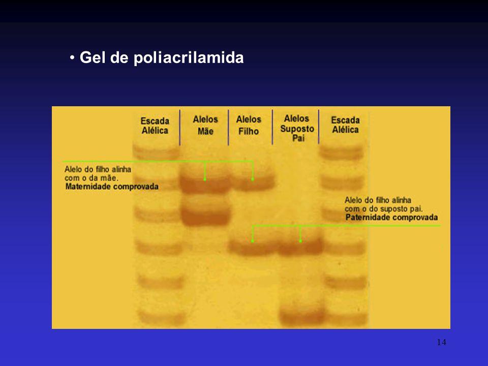 14 Gel de poliacrilamida