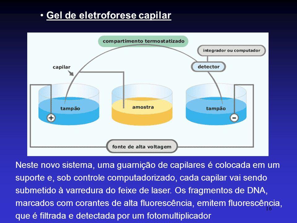 16 Gel de eletroforese capilar Neste novo sistema, uma guarnição de capilares é colocada em um suporte e, sob controle computadorizado, cada capilar v