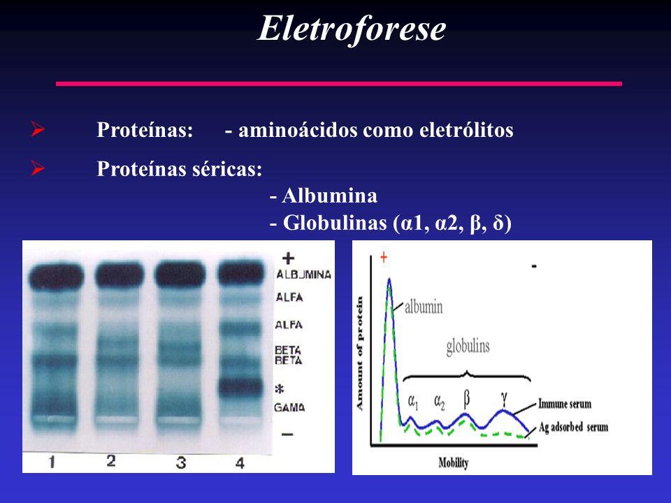 19 Eletroforese Proteínas: - aminoácidos como eletrólitos Proteínas séricas: - Albumina - Globulinas (α1, α2, β, δ)