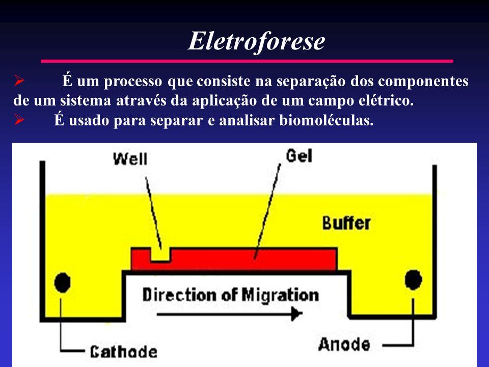 2 É um processo que consiste na separação dos componentes de um sistema através da aplicação de um campo elétrico. É usado para separar e analisar bio