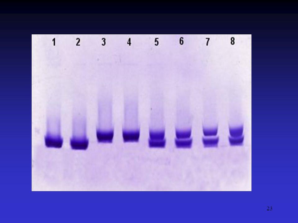24 Eletroforese Hemoglobina C - Indivíduos heterozigotos (AC) - Raros sintomas clínicos - Detecção para aconselhamento genético - Hemoglobinopatia estrutural * substituição do ácido glutâmico pela lisina - Indivíduos homozigotos (CC) - Indivíduos heterozigotos (SC) - Anemia