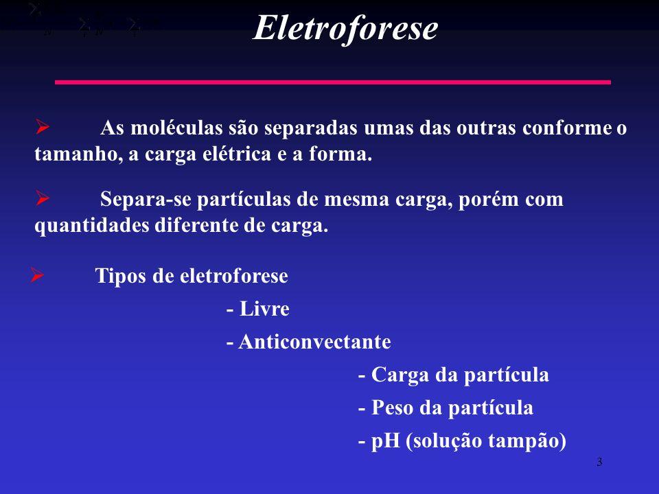 3 Eletroforese As moléculas são separadas umas das outras conforme o tamanho, a carga elétrica e a forma. Separa-se partículas de mesma carga, porém c